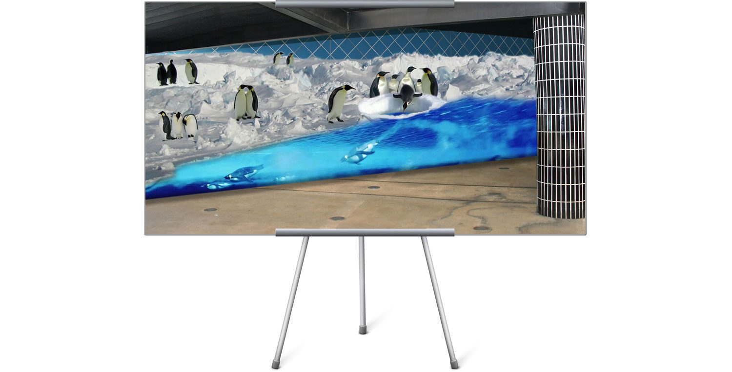 Sea World Penguin Wall Mural