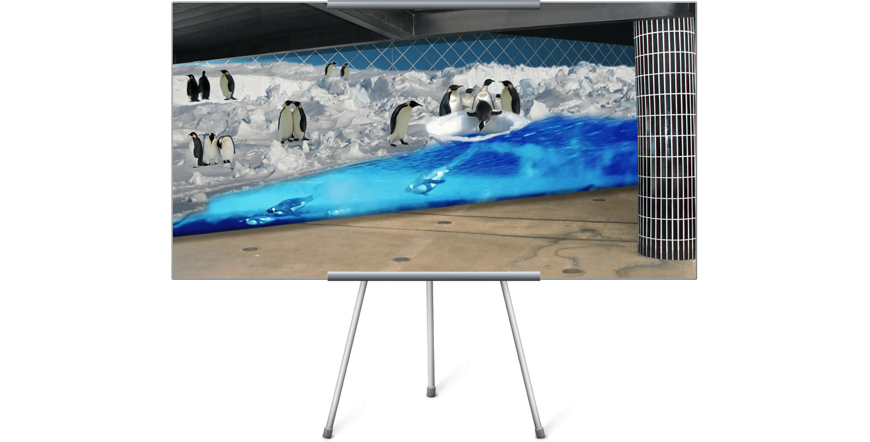 Penguin-on-Wall